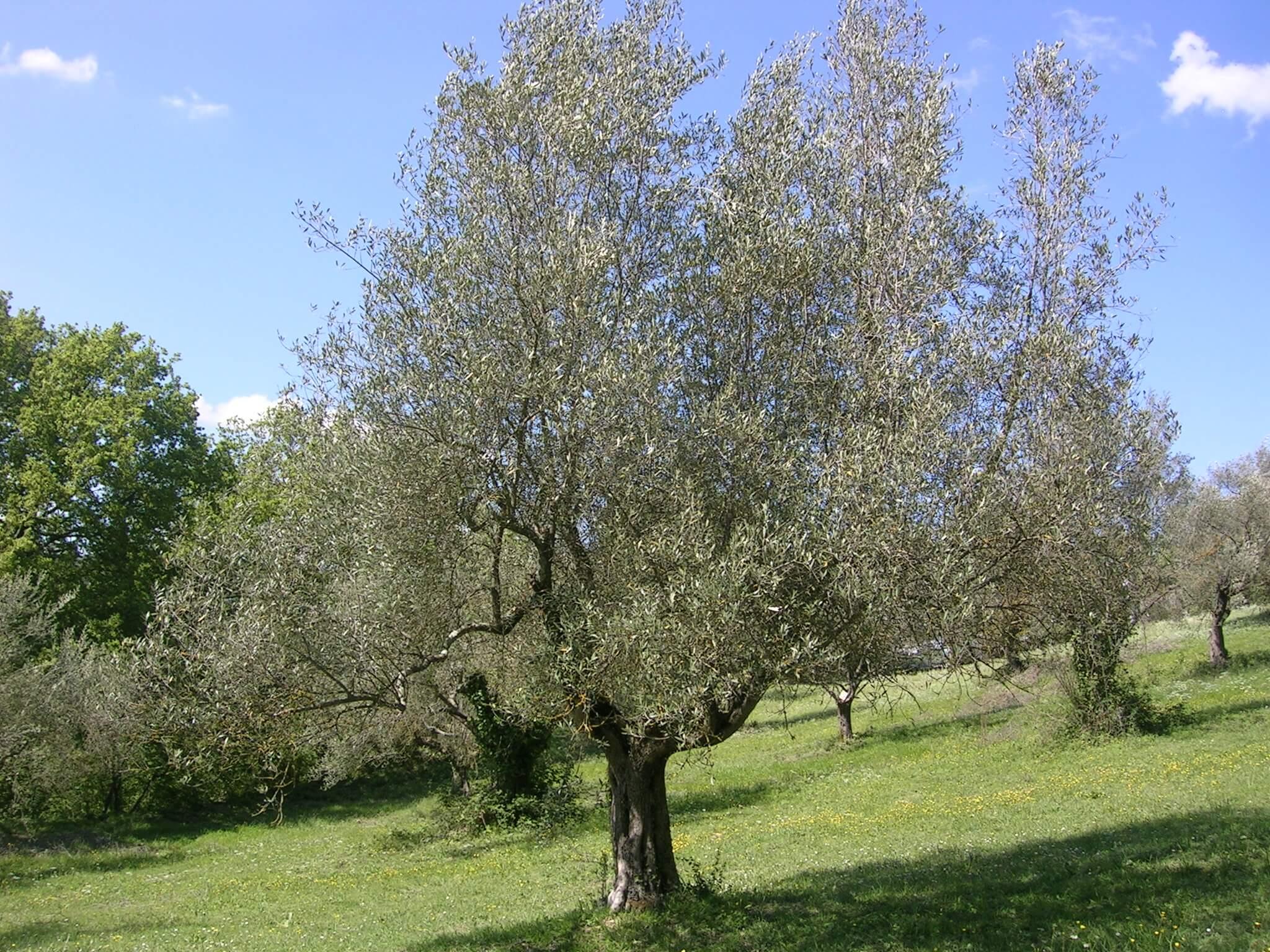 trampolini-antico-frantoio-olio-umbria